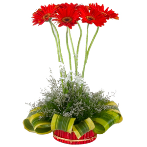Special Arrangement of 7 Gerberas Designer to India.